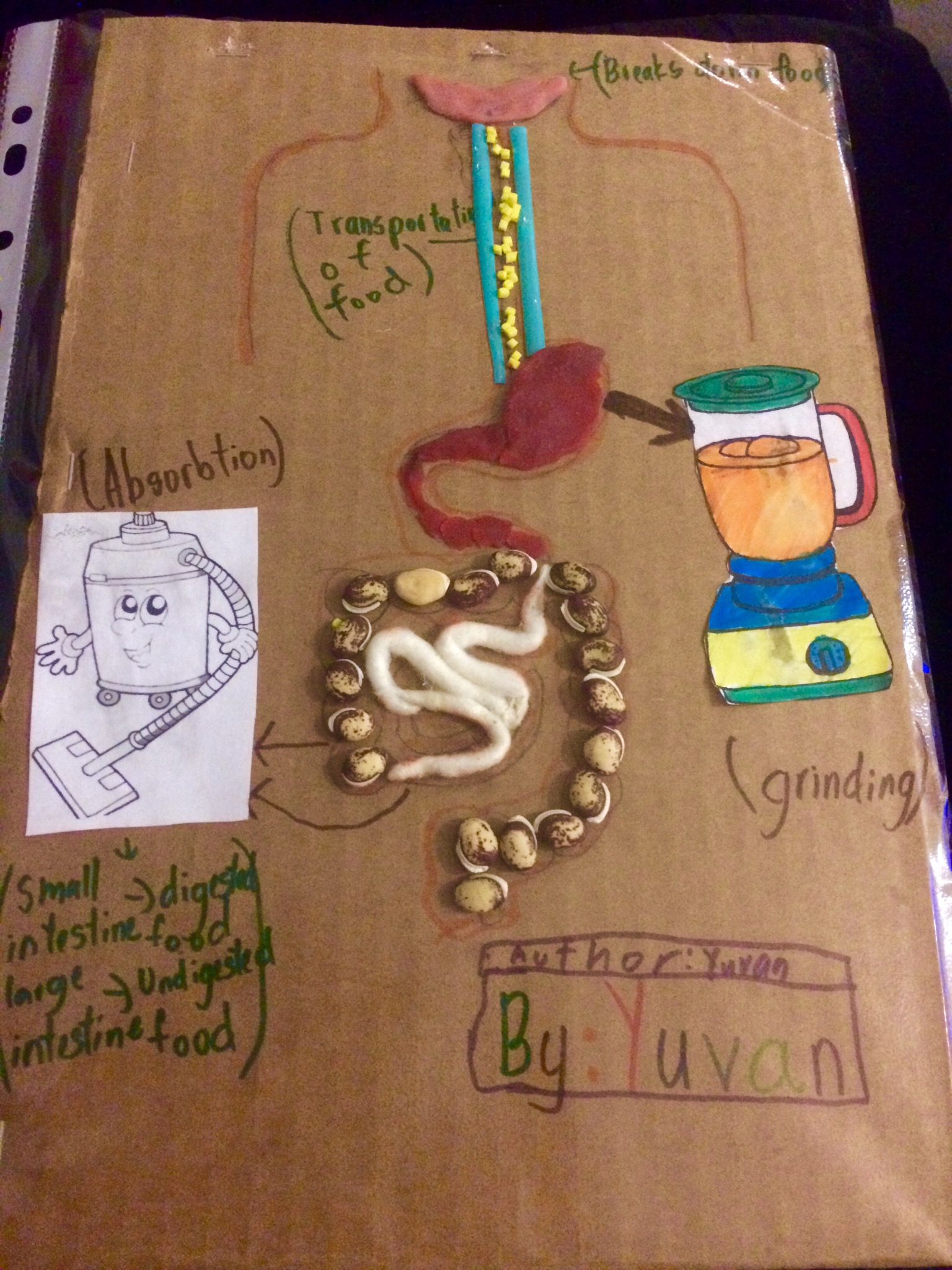 Project Digestive system! « SuheeZ BrainWaves